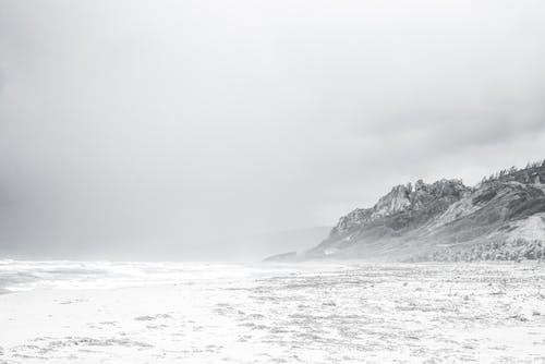 Imagine de stoc gratuită din alb-negru, arbori, ceață, cer