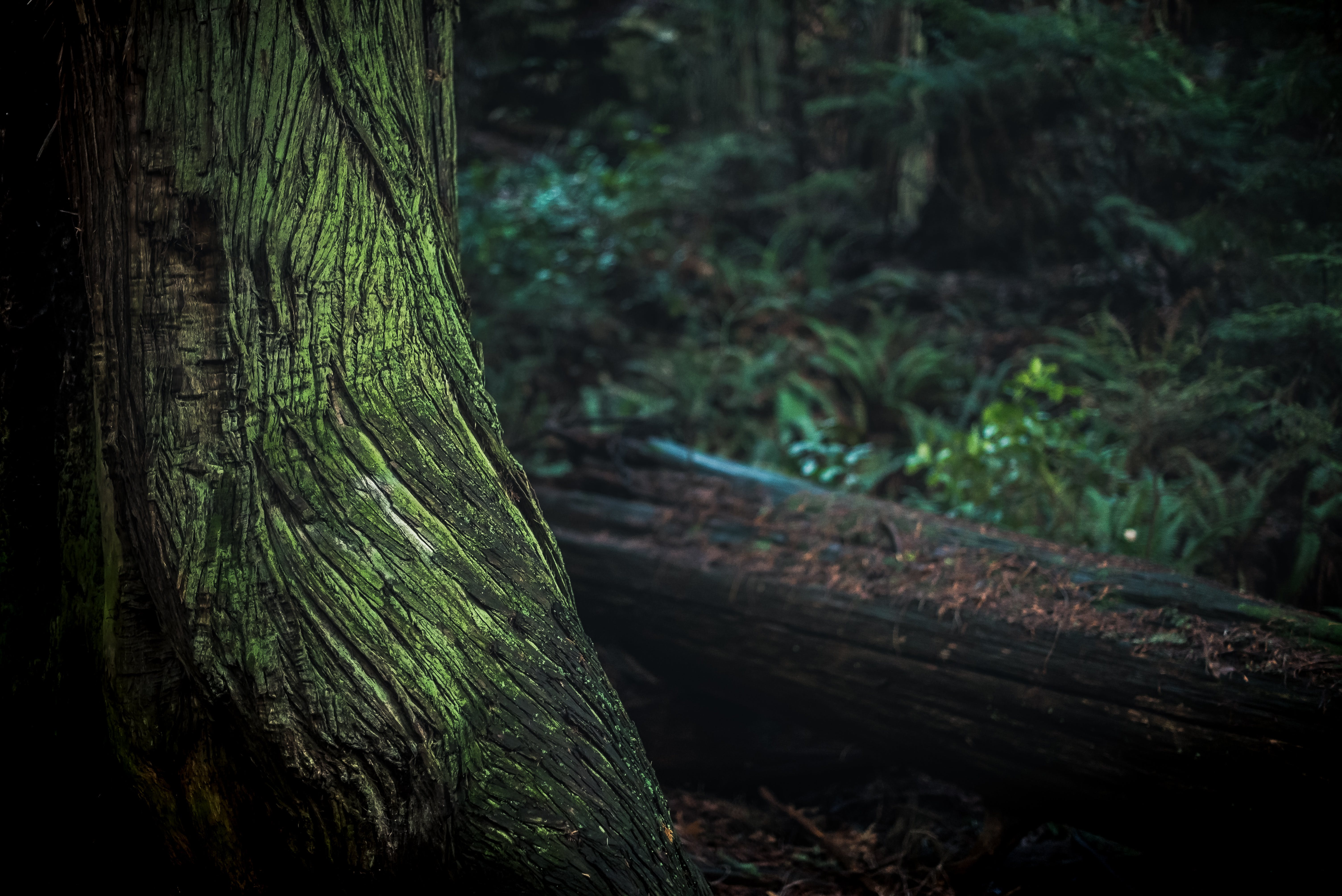 Green and Black Tree Trunk