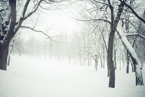 Free stock photo of landscape, snow, trees