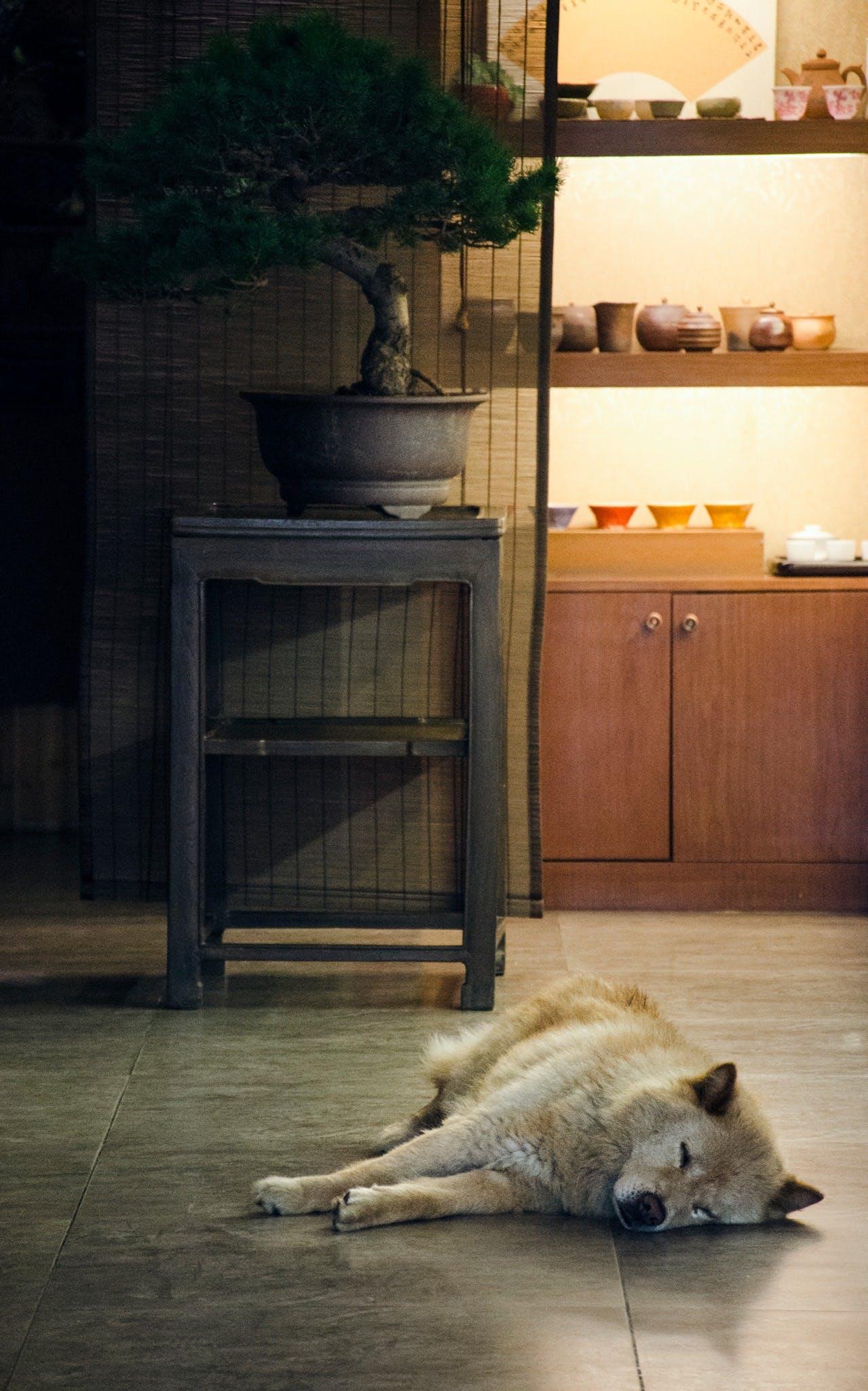 Free stock photo of china, dog, instant, moment
