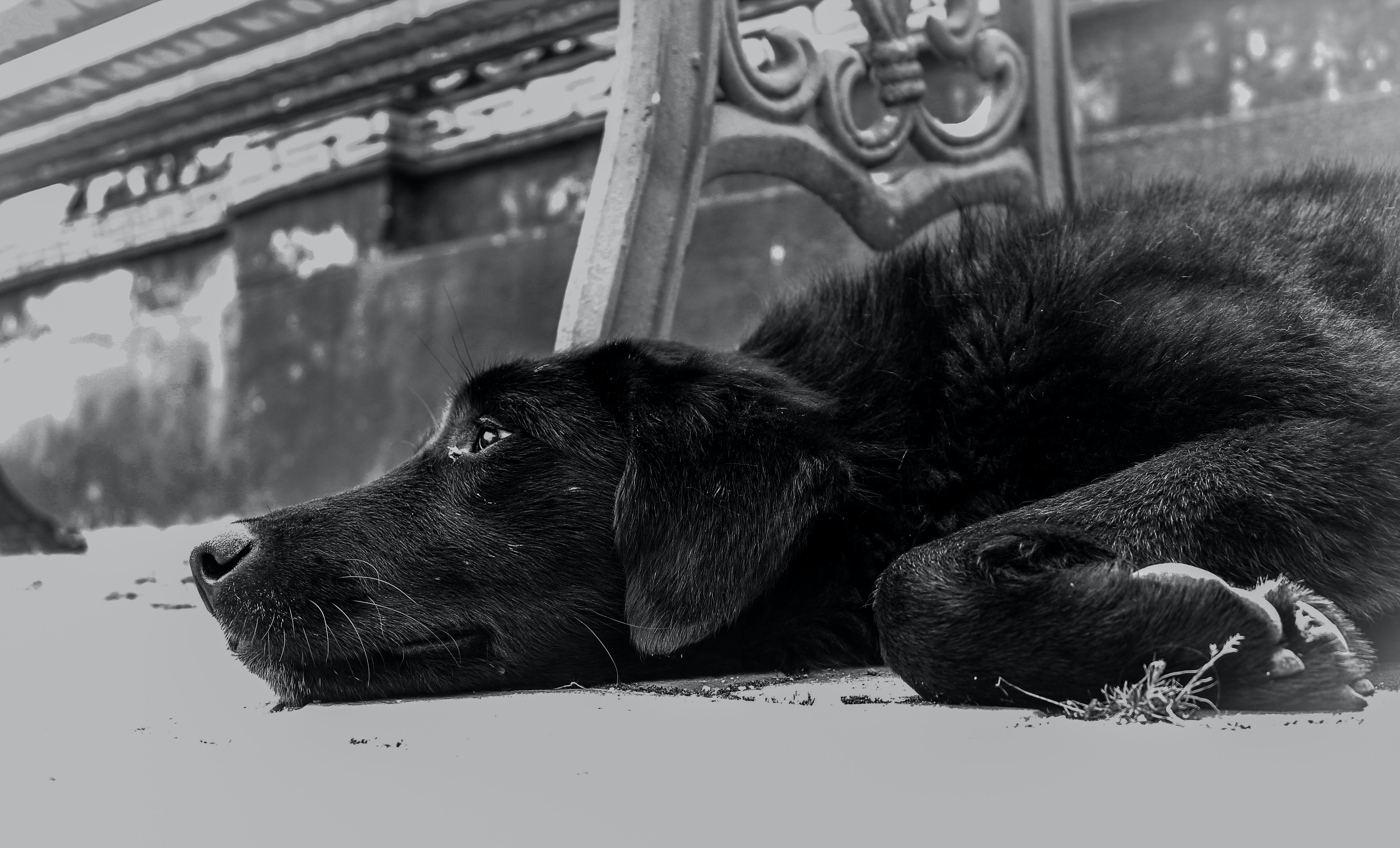 Closeup Photo of Dog Lying on the Ground