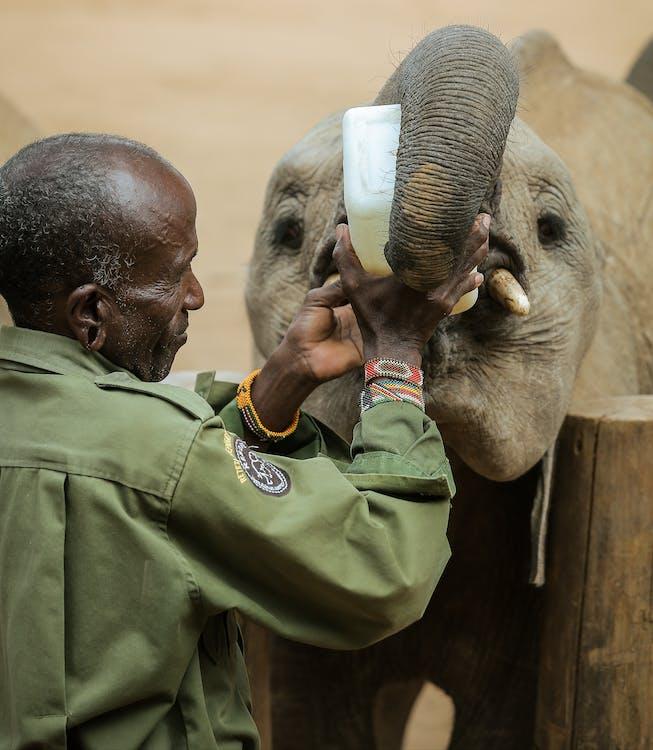 Man in Green Jacket Feeding Elephant
