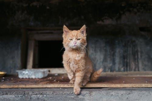 Fotobanka sbezplatnými fotkami na tému adoptdontshop, bez domova, catlife