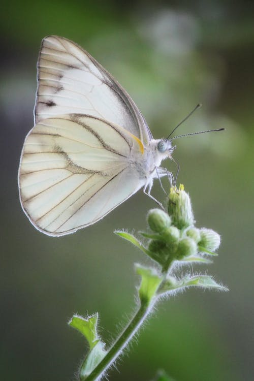 White and Gray Butterfly Perched on Green Plant