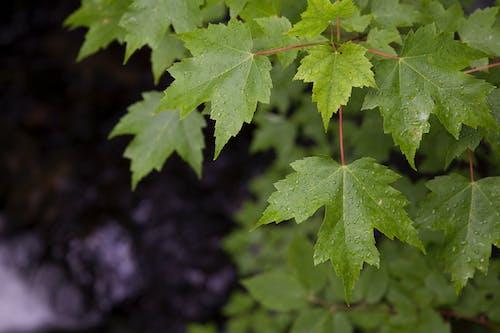 Ảnh lưu trữ miễn phí về giọt nước, màu xanh lá, thực vật, ướt