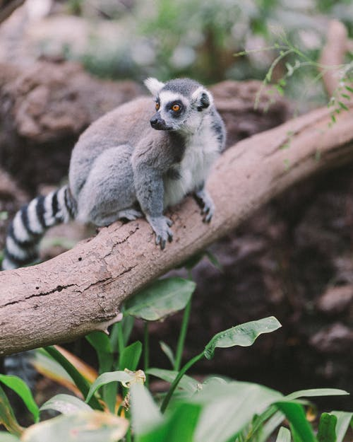 Gray and White Animal on Brown Tree Branch