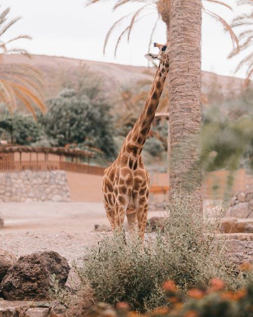 Giraffe Statue on Brown Soil