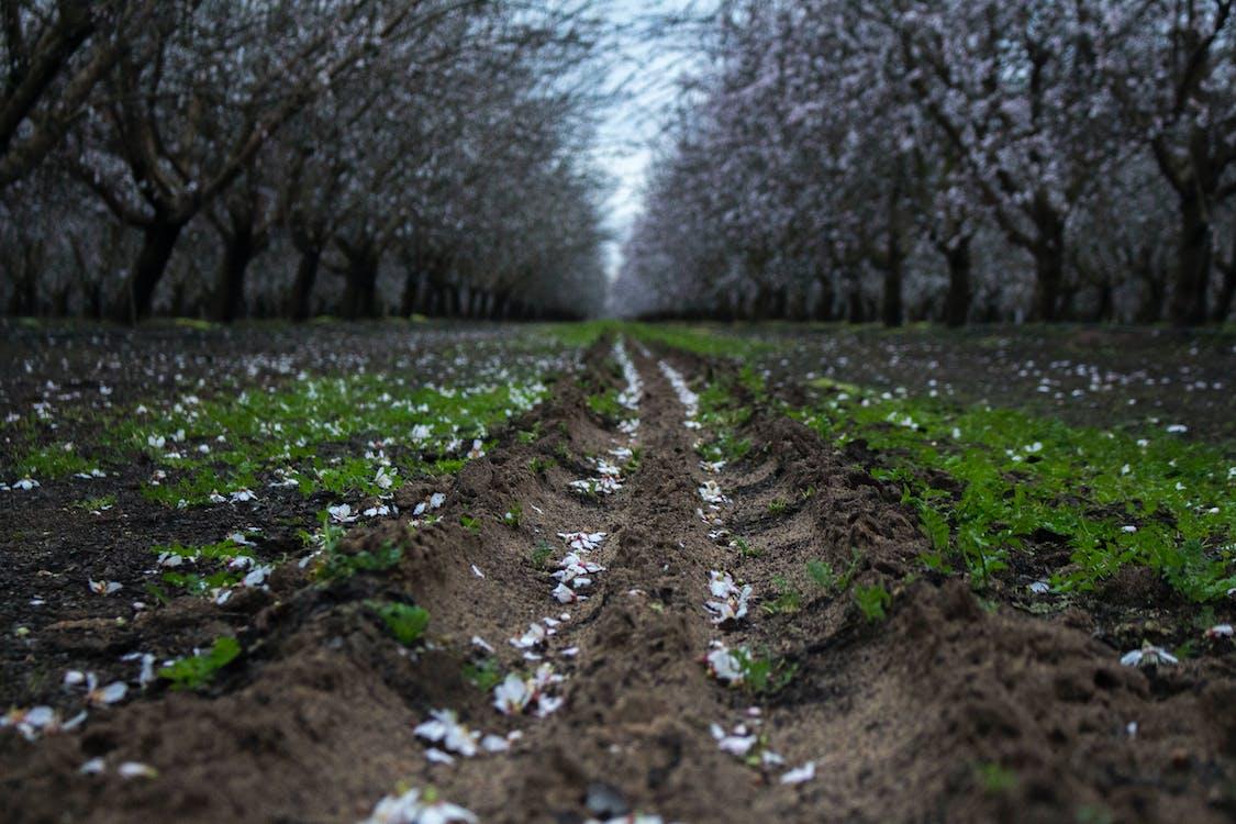 #, #orchards, #屋外