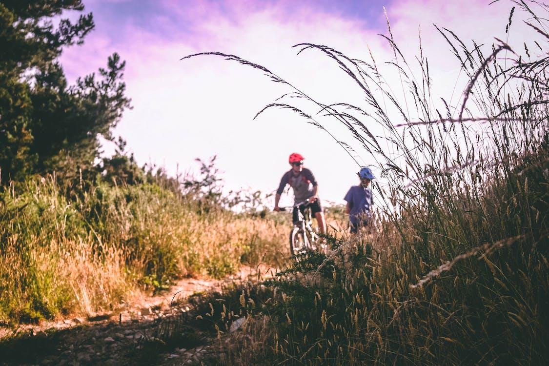 ağaçlar, asfaltsız yol, bisiklet