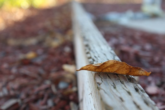 Selective Photo of Dried Leaf