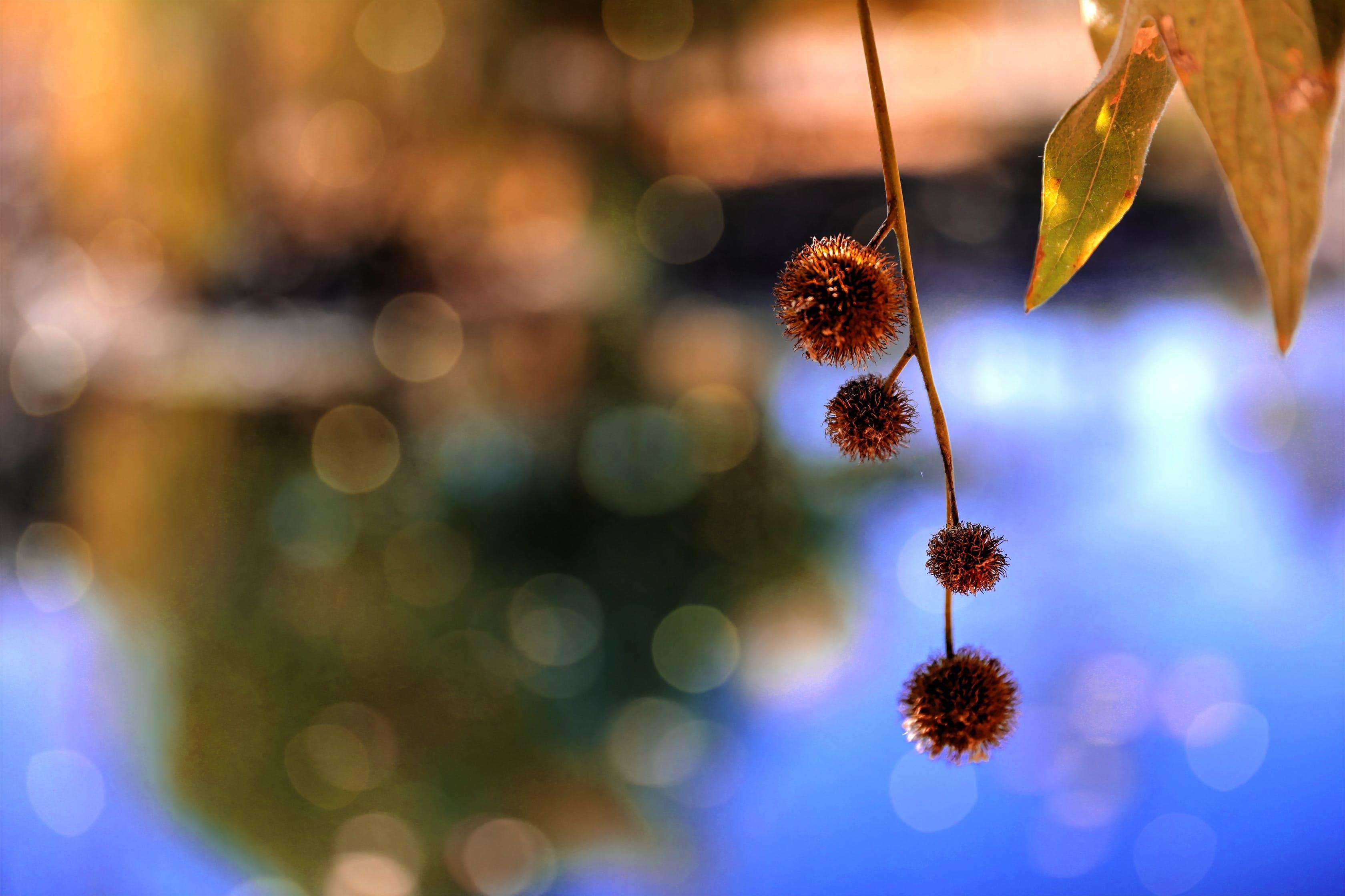 Red Flower Tilt Shift Photography
