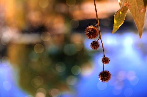 คลังภาพถ่ายฟรี ของ การเจริญเติบโต, ดอกไม้, ธรรมชาติ, พร่ามัว