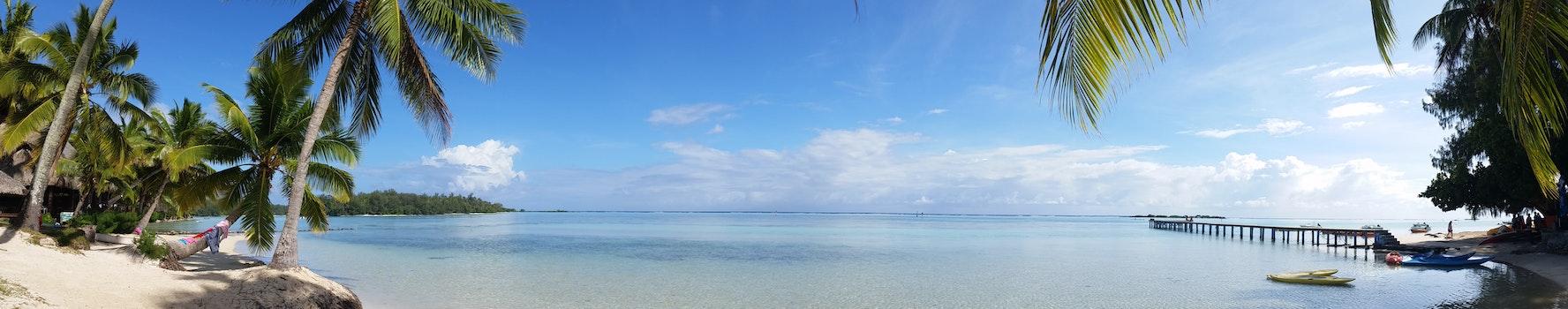Coconut Trees Near Ocean and Dock