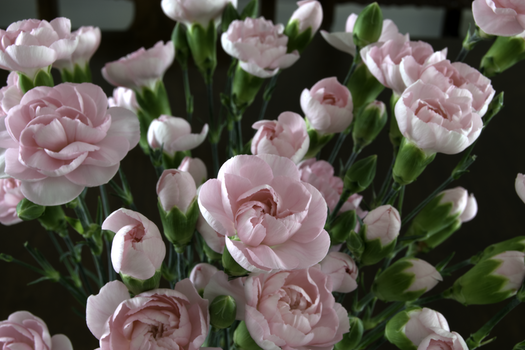 Focus Photography of Pink Flowers