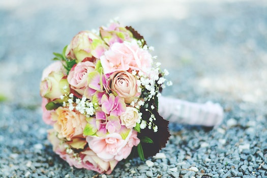 Bouquet of Pink-and-white Petaled Flowers