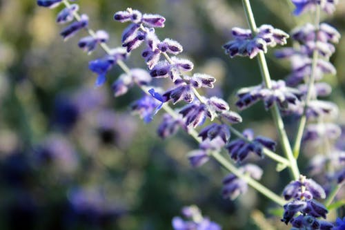 Δωρεάν στοκ φωτογραφιών με λουλούδι, μοβ