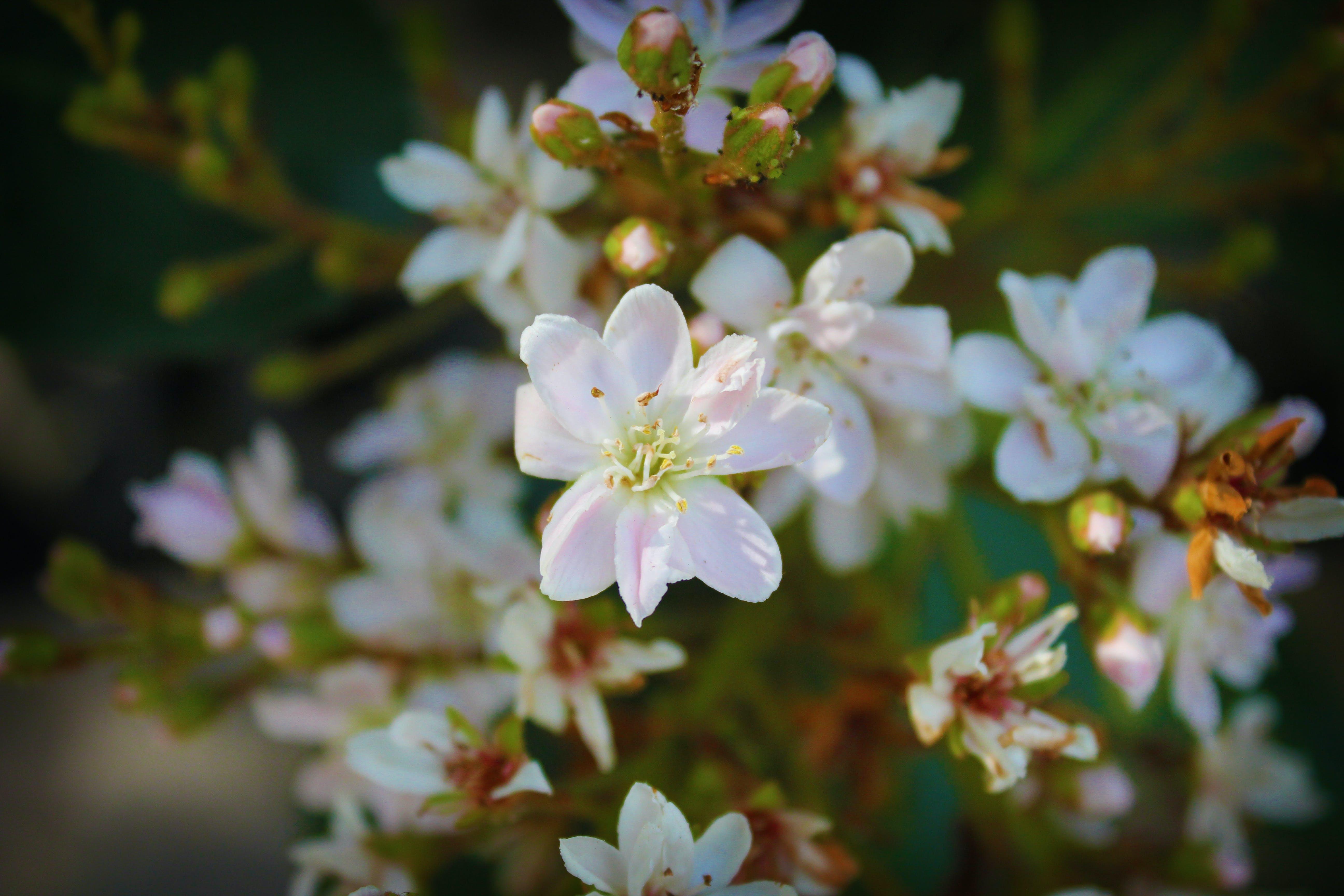 Free stock photo of flower, white