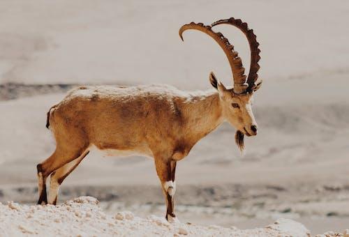 Free stock photo of animal, animal hoof, animal photography