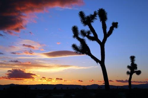 Δωρεάν στοκ φωτογραφιών με joshua δέντρο, δύση του ηλίου