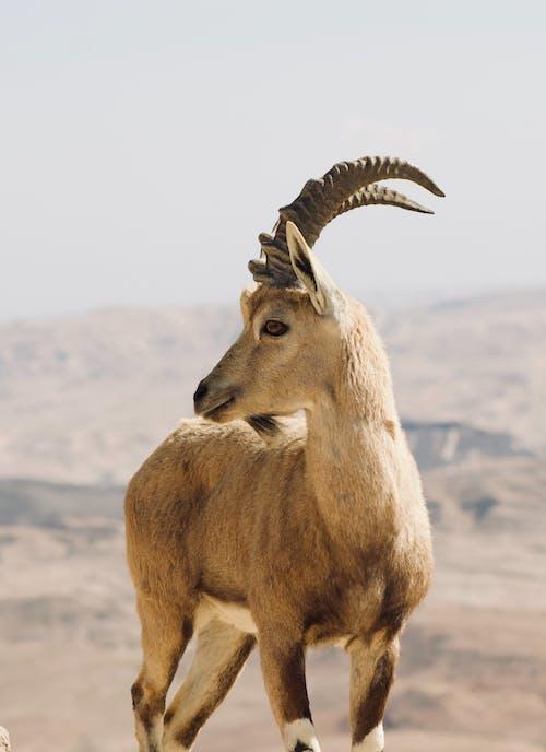 Free stock photo of alert, animal, animal hoof