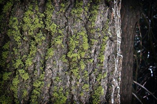 Δωρεάν στοκ φωτογραφιών με γαβγίζω, δέντρο