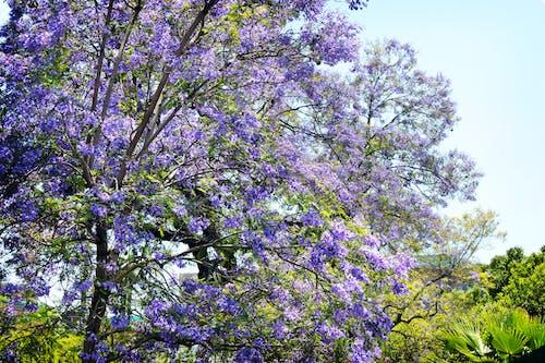 Ilmainen kuvapankkikuva tunnisteilla kasvikunta, kasvit, kasvu
