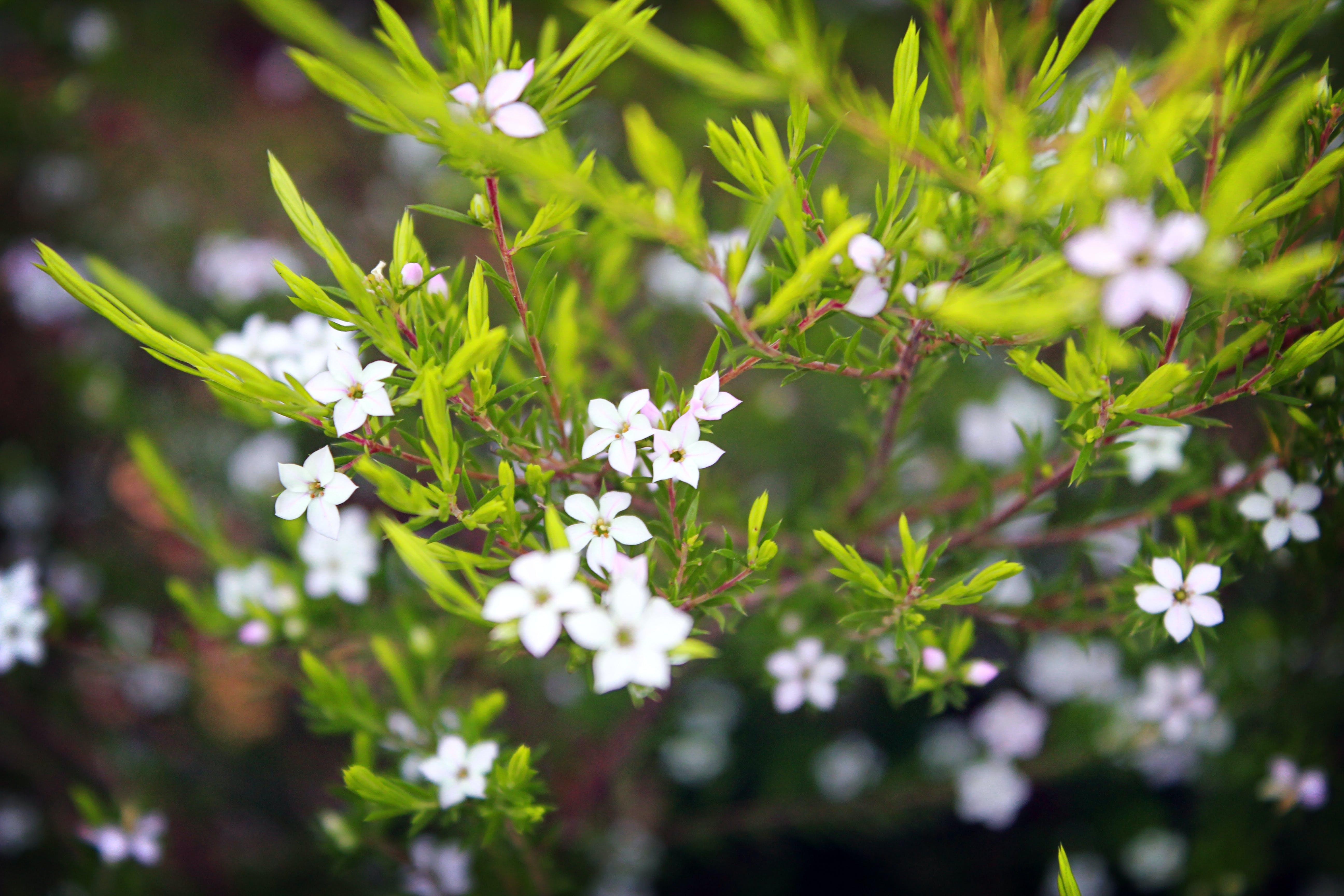 Free stock photo of white, flower