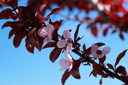 Безкоштовне стокове фото на тему «відділення, вродлива, зростання, квіти»