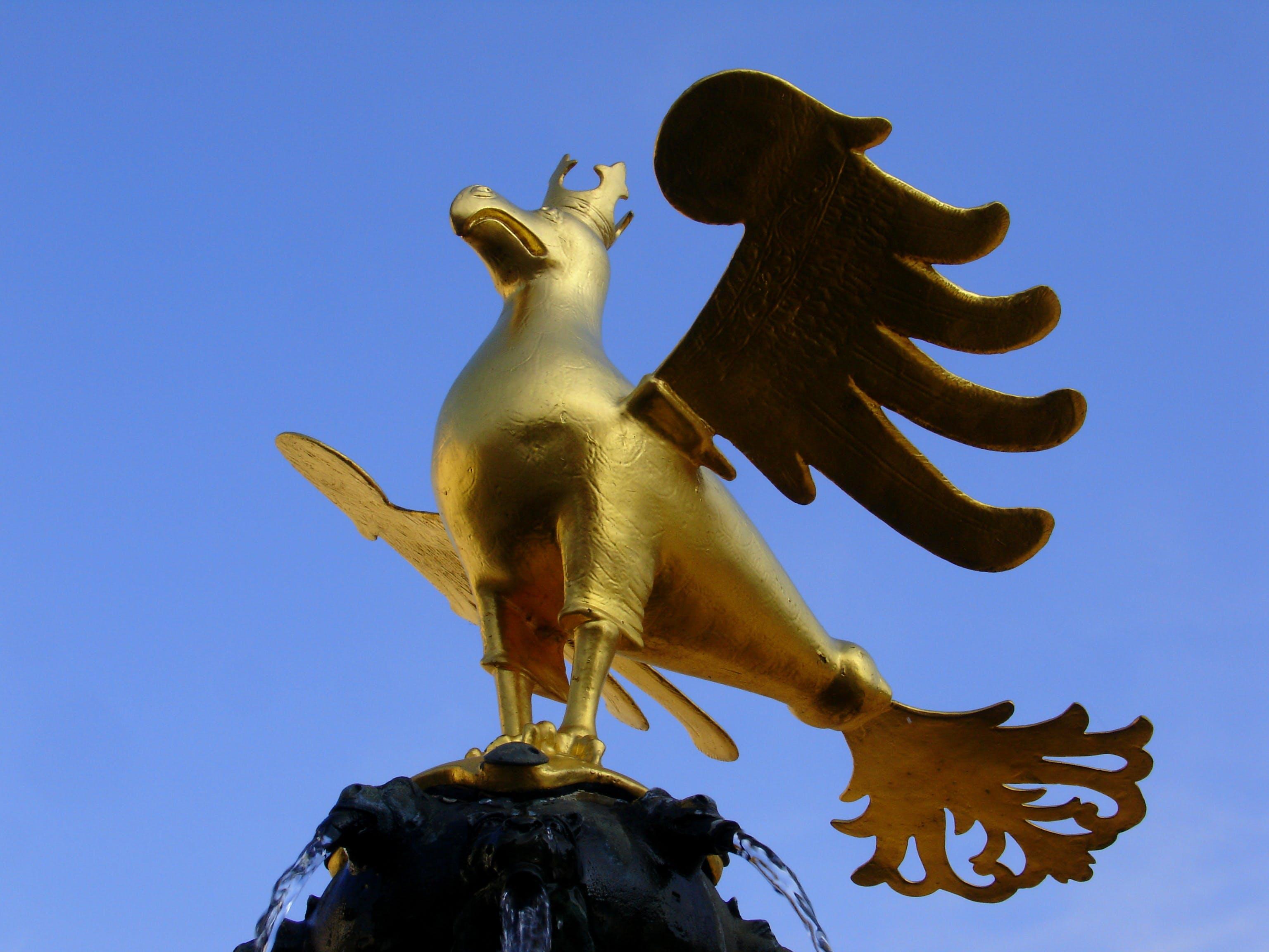 Free stock photo of bird, blue, eagle, fly