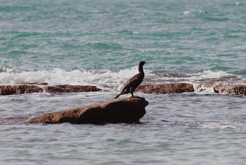 Black Bird on Brown Rock Near Body of Water