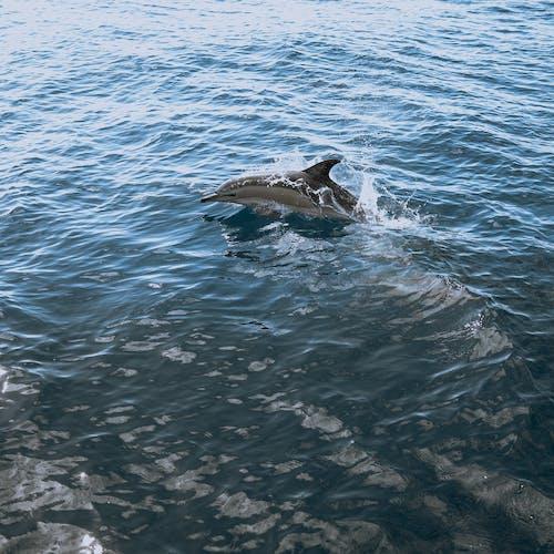 Základová fotografie zdarma na téma @ venku, akvárium, bazén