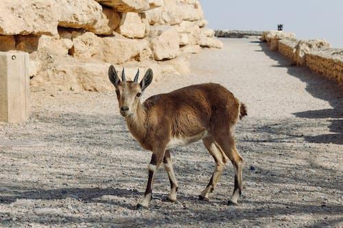 Brown Animal on Gray Sand