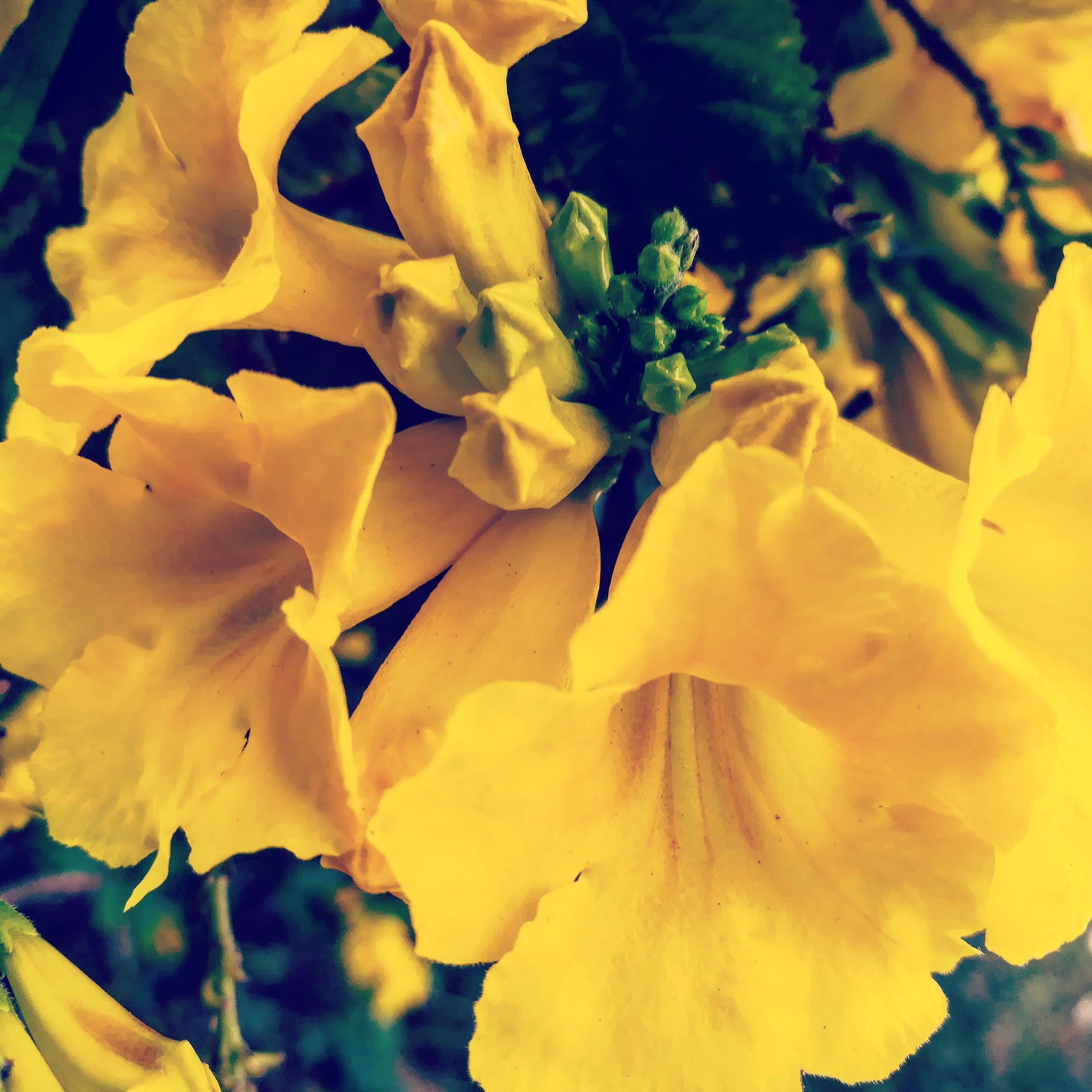 Free stock photo of beautiful flowers, yellow, yellow flowers