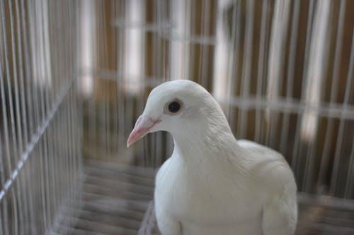 Fotos de stock gratuitas de animal, aves de corral, blanco, color
