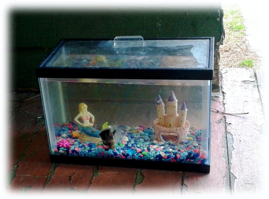 death, fish, Tank