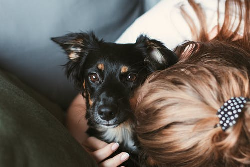 Free stock photo of dog lover