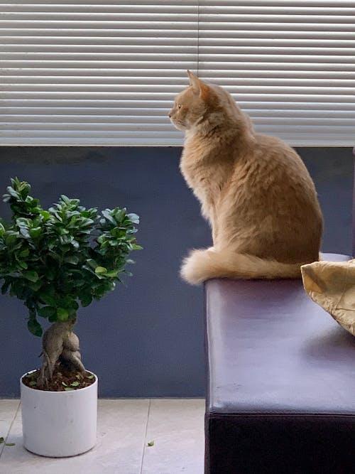 Free stock photo of feline cat, house indoor, portrait