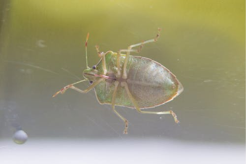 Fotos de stock gratuitas de insecto, insectos, macro