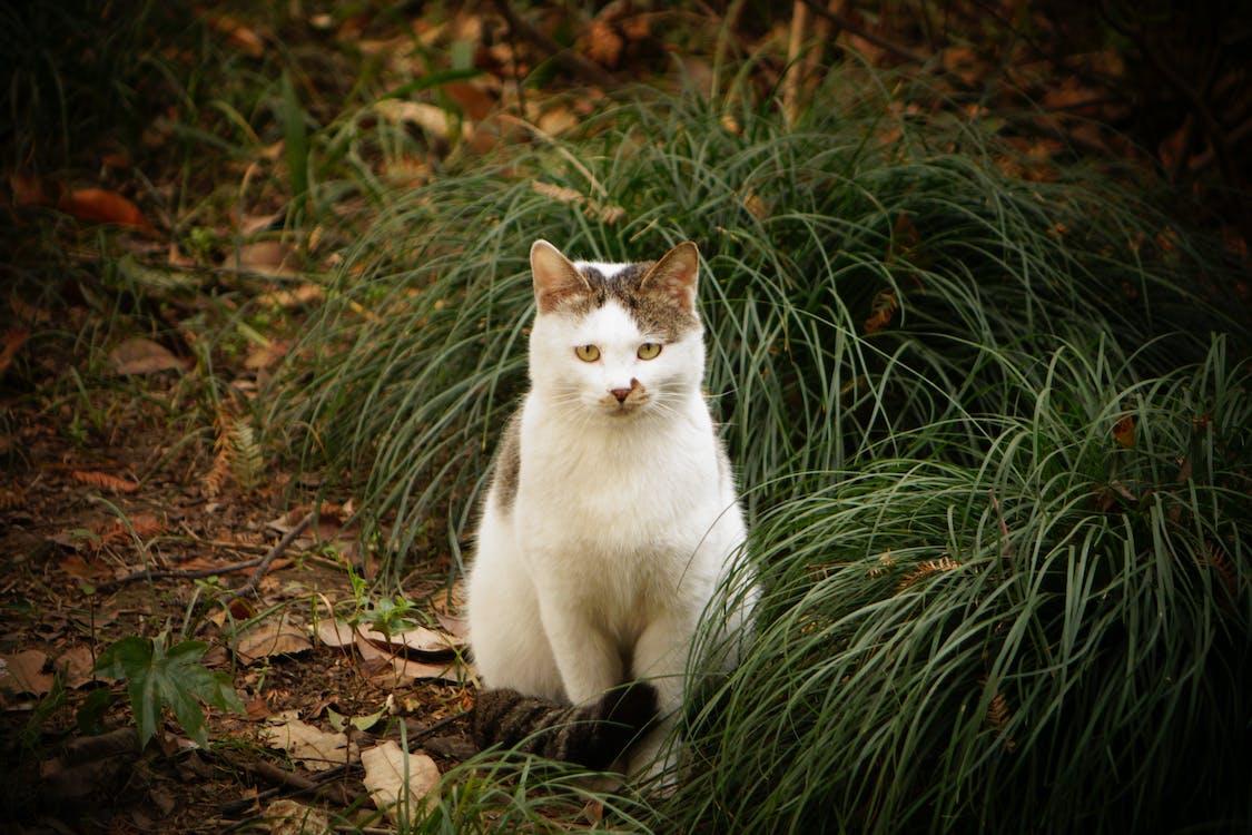 Cat Sitting Beside Green Grass