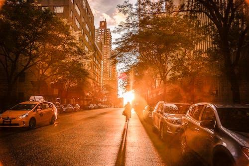 Foto profissional grátis de arquitetura, árvores, automóveis, carros