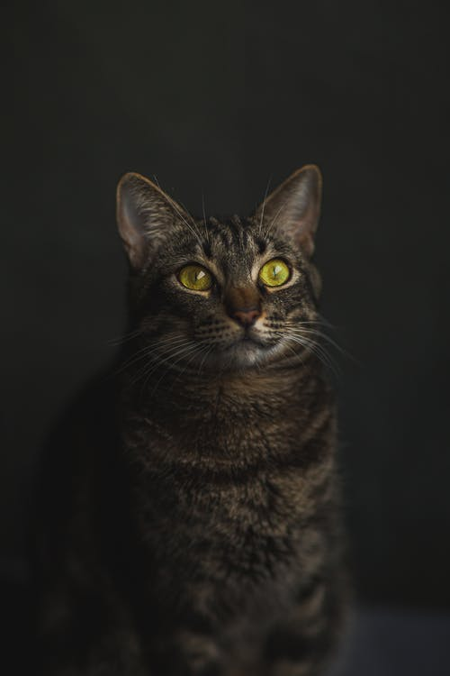 Fotobanka sbezplatnými fotkami na tému cicavec, domáce zviera, domáci
