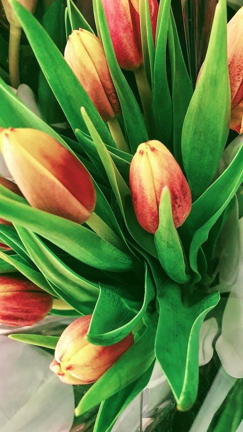 Foto d'estoc gratuïta de floral, flors, ram de flors