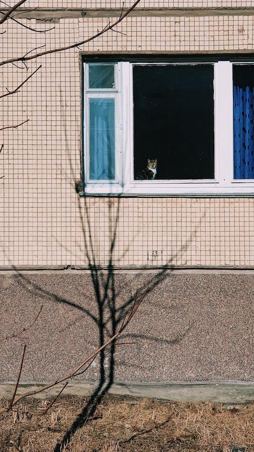 Foto d'estoc gratuïta de a l'aire lliure, arquitectura, buit