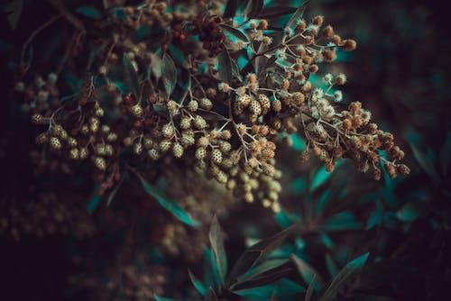 Gratis stockfoto met bladeren, buiten, buitenshuis, close-up