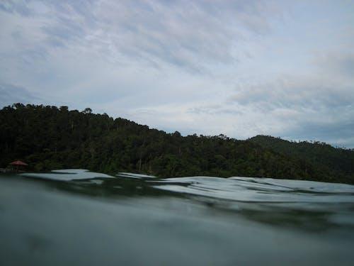Fotos de stock gratuitas de cielo, dice adiós, jungla, mar