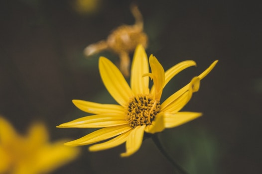 Free stock photo of nature, summer, yellow, flower