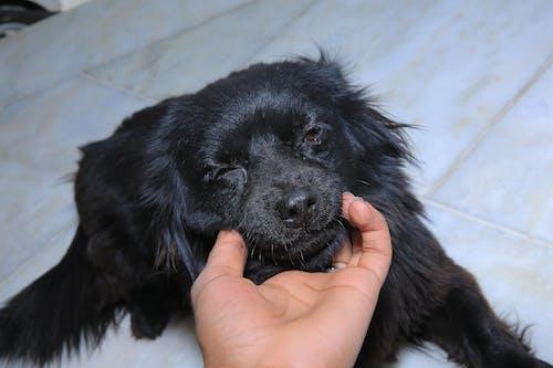 Free stock photo of cry, dog