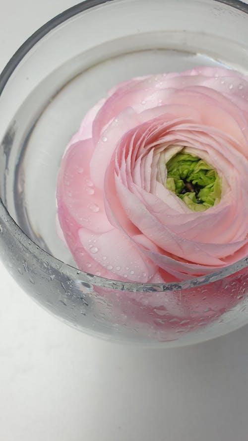 Tender pink flower in small round vase