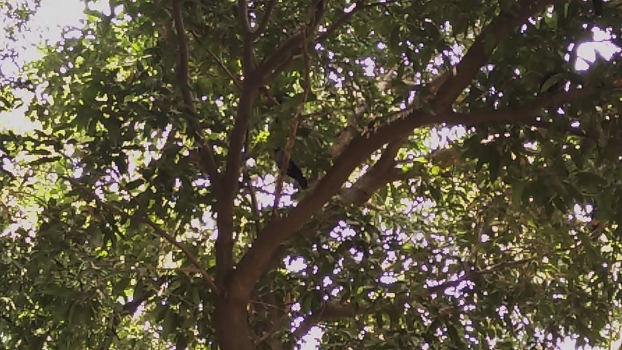 Free stock photo of nature, bird, tree, crow