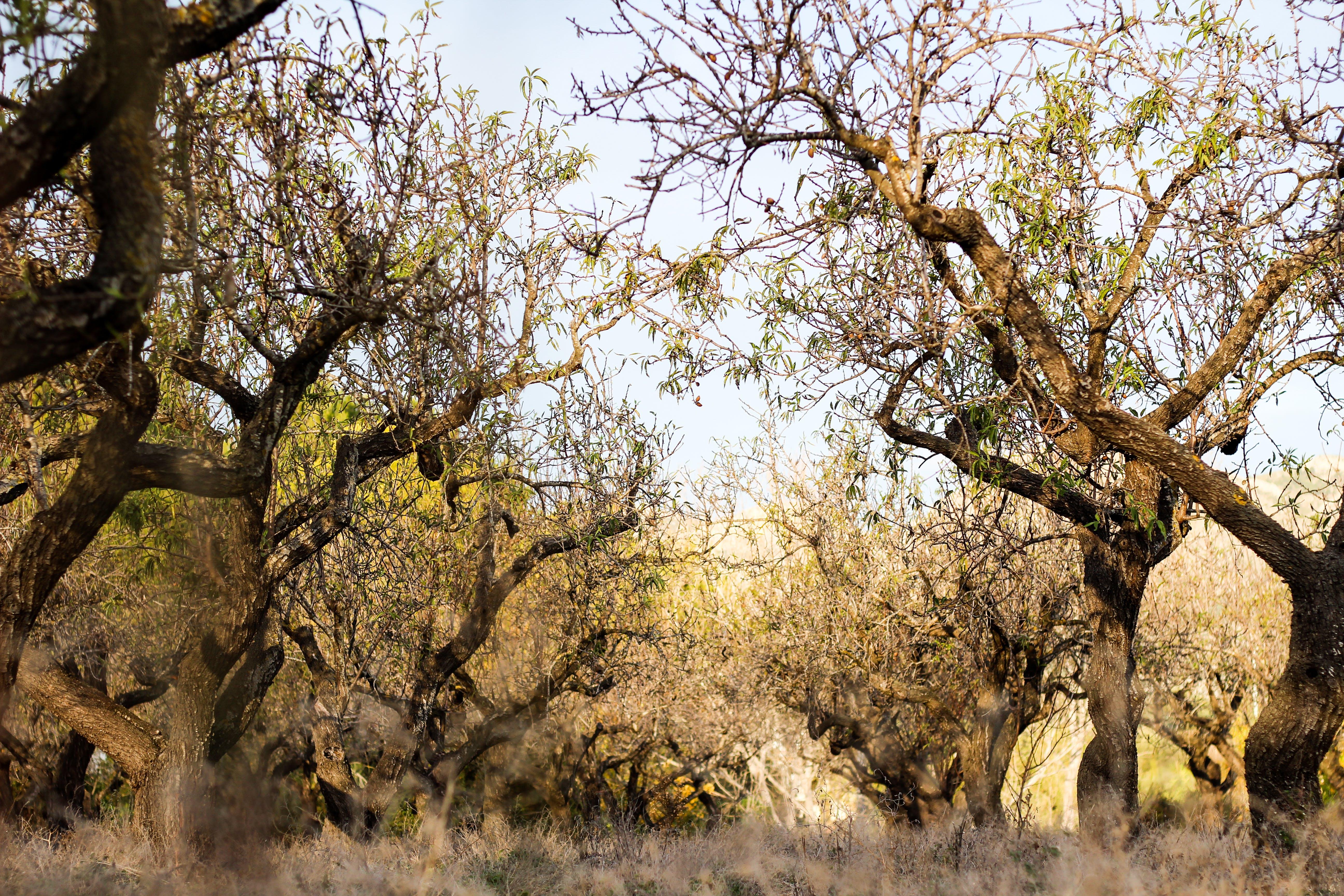 Foto profissional grátis de árvores, aumento, filiais, floresta